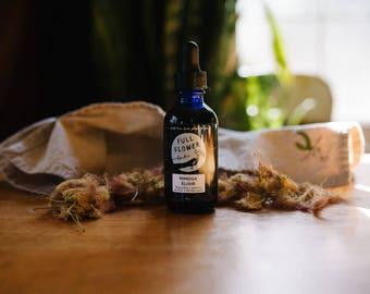 Mimosa Elixir // Blossoms + bark to anchor and lift the spirit // Seasonal, small batch medicine