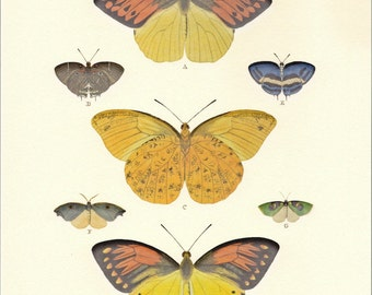 Natural History Print Cramer's Butterflies Illustration PSS 2052