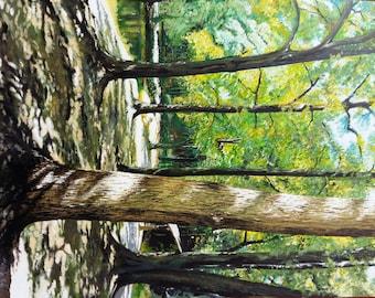 walk at the Holden Arboretum