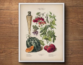 French vegetables print, Botanical illustration, Vintage vegetable print, Botanical print, Botanical art, Large wall art, Wall art