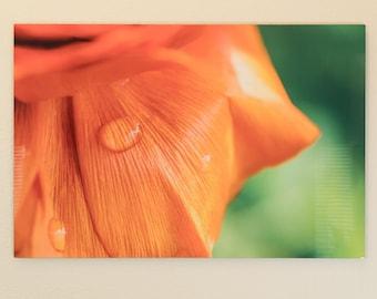 "Flower Photographic print on Metal - 24"" x 36"""