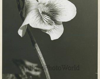 Violet flower vintage art photo by B. Taylor