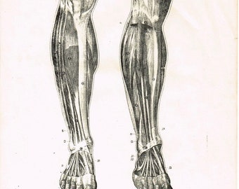 Antique vintage Art Deco 1930s , anatomy human body, muscles legs feet, black, and white, book plate, print
