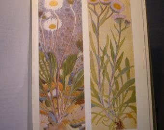 White Silver Alpine Flowers Botanical Print - Flower Lithographs - vibrant colors - double sided - Daisy, Fleabane, Cotton