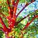 Fine Art Poster Print of an Original Abstract Acrylic Painting - Summer Medley