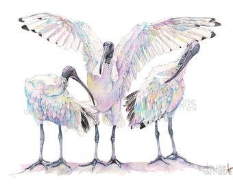 Ibises watercolor painting print, A3 size I24817, Ibis print, Ibises print, Australian bird print, Contemporary coastal wall art