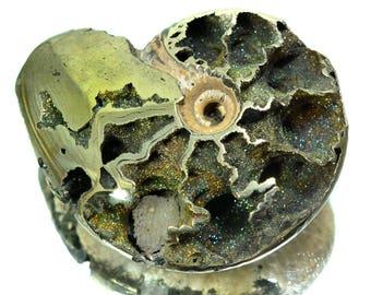 26g RARE Eteoderoceras Armatum Pyritized Ammonite Fossil