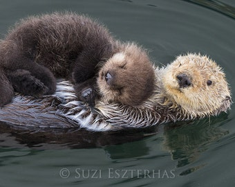 BABY SEA OTTER and Mom Photo, Baby Animal Nursery Art Print, Animal Nursery Decor, Baby Animal Photo, Animal Wall Art, Sea Otter Pup Photo
