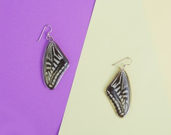 Real Butterfly earrings/Papilio/ Real preserved laminated resining Butterfly Ear Dangles/ Western tiger swallowtail