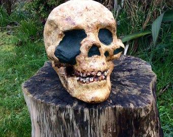 Cro-Magnon Skull Replica