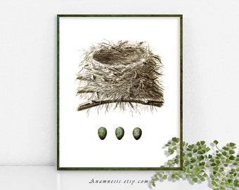 NEST with three BLUE EGGS - Instant Download -antique bird nest illustration to print and frame or use on totes, pillows, cards, aprons etc.
