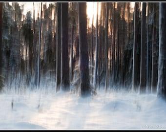 Dreamy Forest  Photographic Fine Art Print