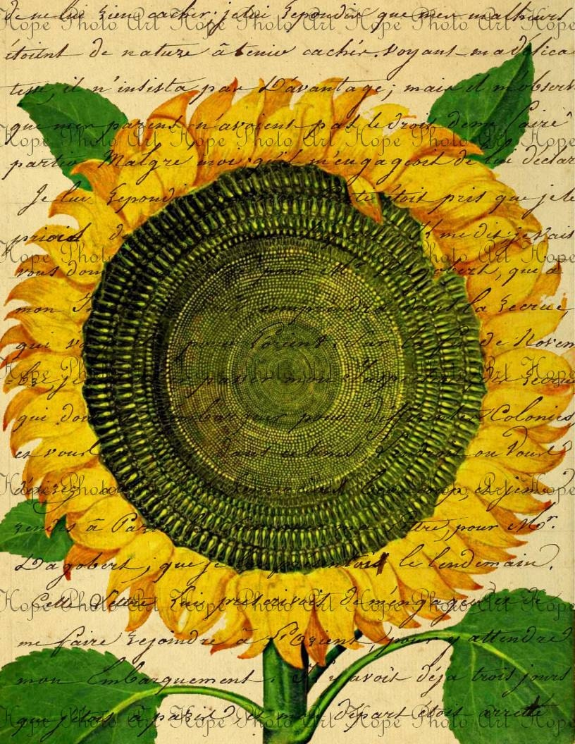 Sunflower French Script Dictionary Digital Collage Sheet image