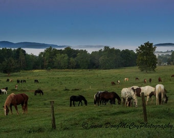 Early Morning in Cades Cove. #3726