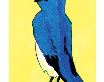 Oiseaux - Merle d'État