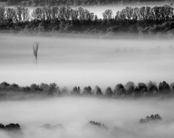 LONELINESS. Landscape, Danube, Delta, Foggy, Tree, Forest, Misty, River, Black and White, Dunes, Home Decor, Art Print, Wall Art, Canvas Art