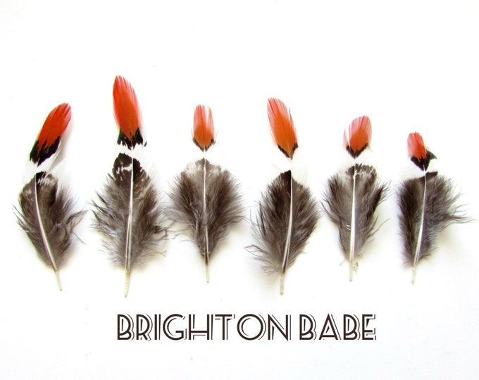 10 Small phesant feathers. Natural Feathers - White, Grey and Rusty Orange natural feathers - Feathers in earthy tones - Real feathers.