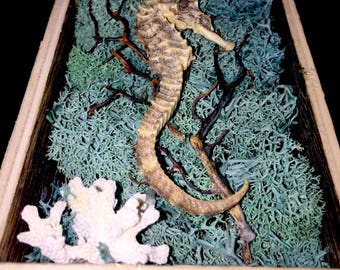 Seahorse Display (medium)