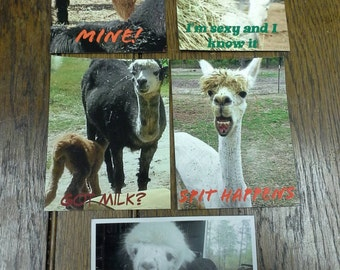 Alpaca picture magnets with captions