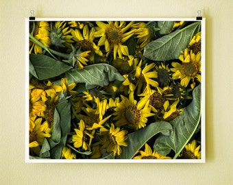 ARROWLEAF BALSAM - 8x10 Signed Fine Art Photograph