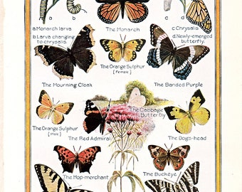 vintage print of Butterflies, from 1926, a charming decoration for cottage style decor.