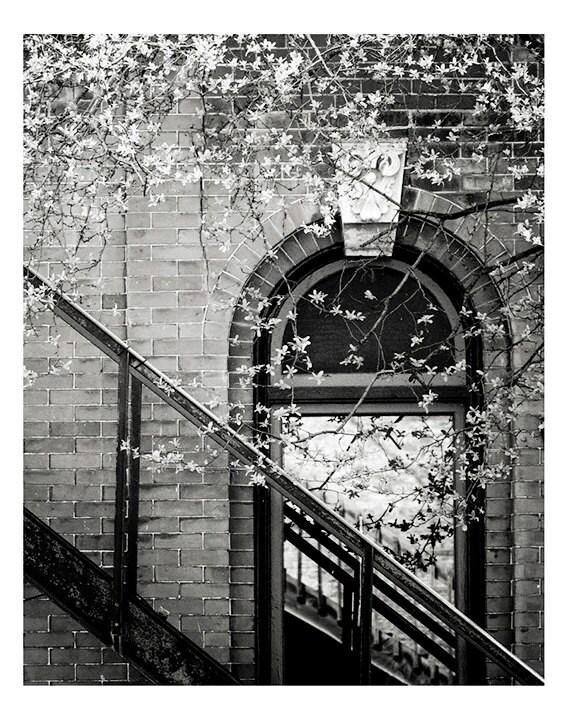 City Photography, Wall Art, Fine Art Photo, Urban, Nature, City, Home Decor, 5x7 & larger fine art print