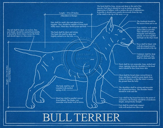 Bull terrier blueprint elevation bull terrier art bull malvernweather Gallery