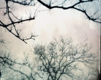 Whispers of the Woods. Photograph, Art Print, Art, Photography, For Home, Wall Art, Wall Decor, Tree, Exquisite, Obscura.