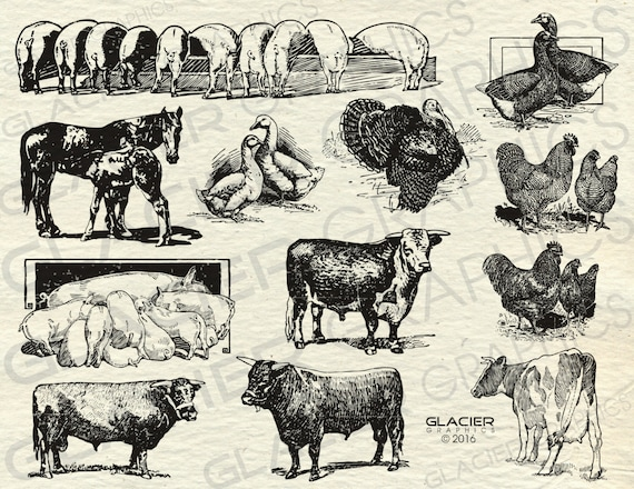 Vintage Farm Animal Illustrations Printable Animals Clipart Vector Country Copyright Free