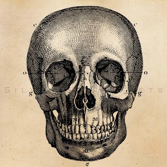 Vintage Skeleton Skull Illustration Printable 1800s Antique