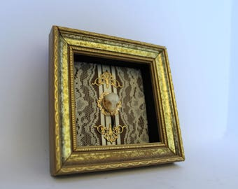 Bird Skull in Shadow Box