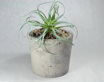 Cylindrical Concrete Planter | Concrete Container | Office Decor | Succulent Planter | Pencil Pen Holder | Cactus Pot | Bathroom Organizer
