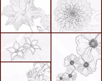 Set of coloring pages (5 pages) pdf file flowers