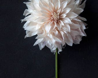 Cafe au Lait Dahlia Print -  Photography print - Art for your home