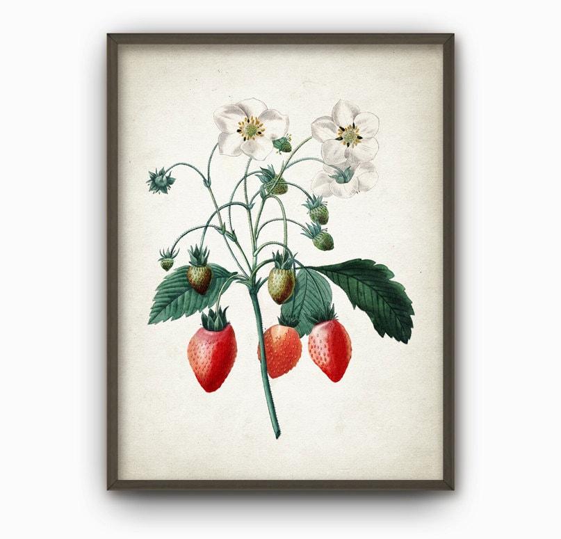 Wilde Erdbeeren antike botanische Wand Kunstdruck Vintage