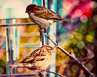 """16x20 photograph - """"Sweet Sparrows"""" - fine art print - whimsical photography - New York Highline - two sparrows - pastels - dreamy"""