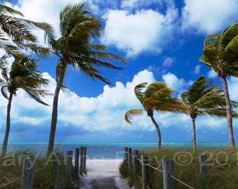 Palm Trees and Day Dreams, Smathers Beach, Key West, Florida