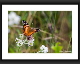 A Fine Art Print of a Butterfly in Nature, Texas, Butterfly, Photograph