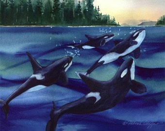 Orca // Family Tides // Pacific Northwest Whales // Watercolor // Puget Sound