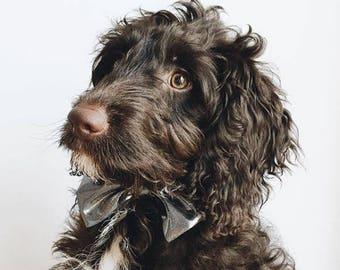 Black Sparkle Party Dog Bow Tie