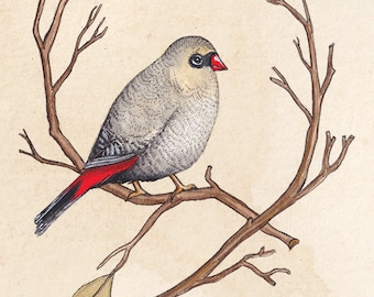 Firetail Bird A5 Print, Bird Artwork, Bird Watercolour Painting, Art Print, Wall Art, Wall Decor, Australian Bird Print, Bird Print