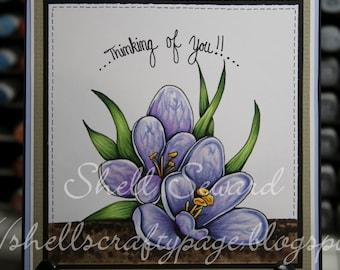 Crocus Spring flower Digi