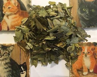 Curry Leaf (Murraya koenigii) Certified Organic & Kosher herb 1g-1lb