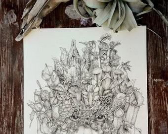VORONOI DECOMPOSITION - Carnivorous plants -Pitcher plant - Nepethes -Sarracenia - Botanical illustration - Art print