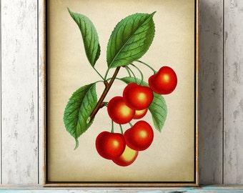 Cherries botanical print, cherry poster, red fruit print, cherries print, cherries art decor, botanical art, botanical print
