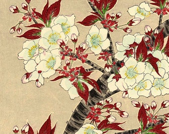 Japanese flowers art prints, floral art, Blooming Sakura Cherry Blossoms fine art print, paintings, woodblock prints, wall art home decor