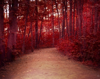 Red Forest - Red Trees, Surreal Forest Photo - Red Leaves - Mysterious - Autumn Photograph - Nature Photography, fairytale forest