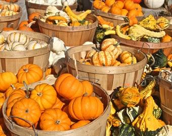 Farmers Market Art Print, Food Photography Pumpkin Autumn Decor Wall Art Wall Decor Gourds Halloween Fall Orange