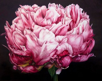 Pink Peony  - fine art - archival botanical print, 11 x 8 inches, watercolor print