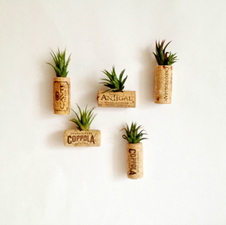 5 air plant cork magnets Living decor magnetsTiandsia air